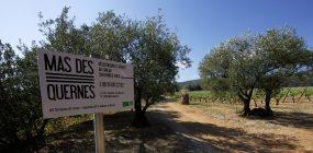 bild der Einfahrt zu Mas des Quernes im Languedoc in Südfrankreich