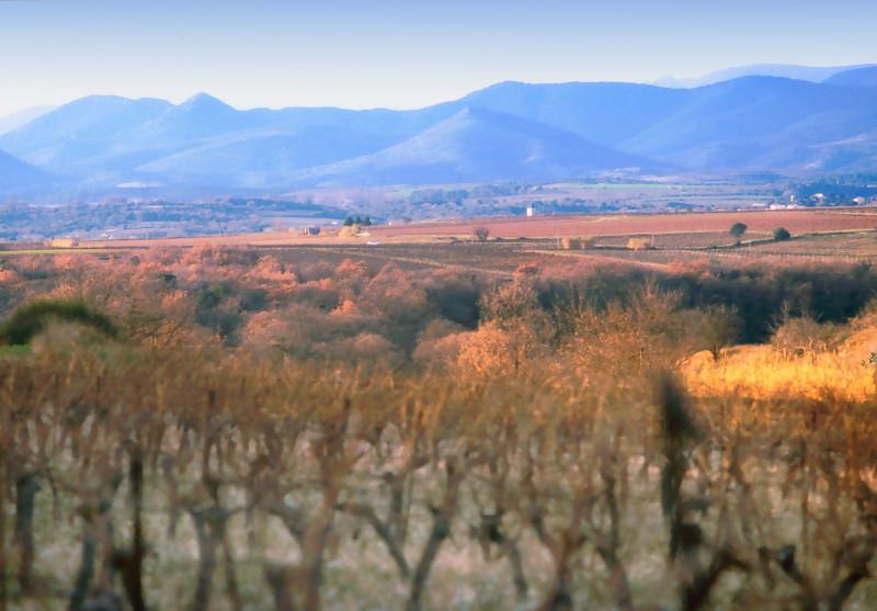 Weinbau – Was passiert wann im Weinberg