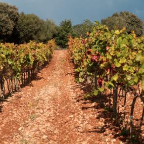 Unsere Winzer – Can Majoral Mallorca