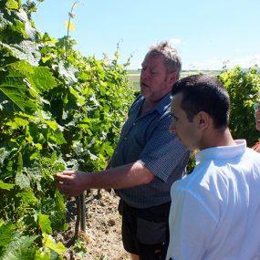 Zu Besuch auf dem Demeter-Weingut Walfried Sander