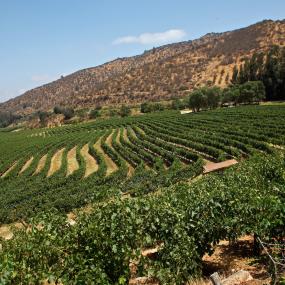 Lieblingswein – Sauvignon Blanc 'Armador' Odfjell